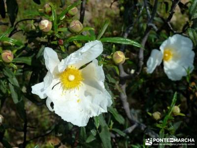 Cascadas del Aljibe; pueblos con encanto; botas de montaña; patones;la garganta del cares